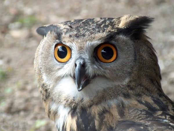 Fiches documentaires sur les animaux de la forêt
